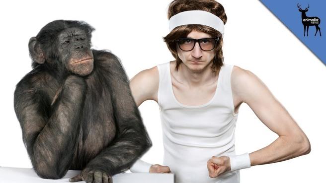 chimps to man