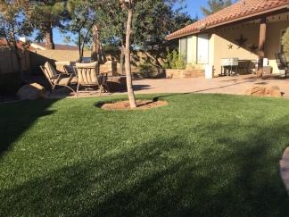 backyard-grass