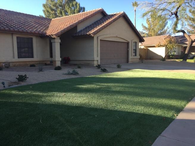 frontyard-grass