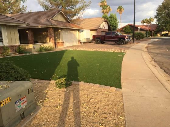 neighbors-grass
