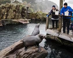 feeding seals