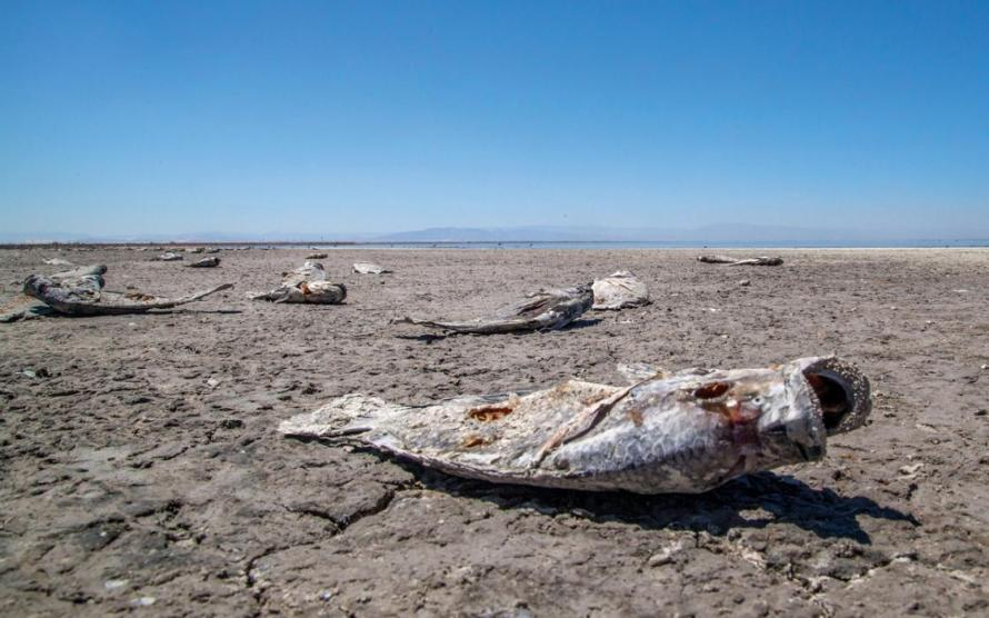 2018-1-SaltonSea-ph1-WB