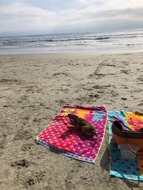carol-beach